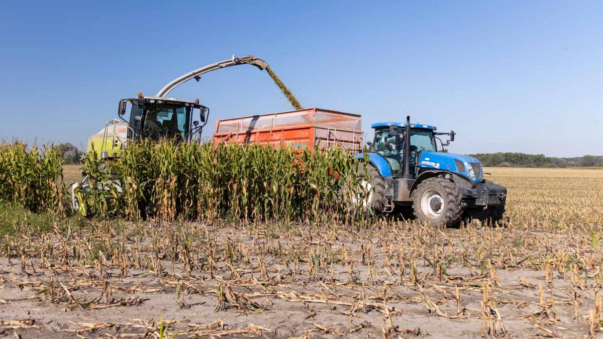 kukorica-betakaritas.jpg