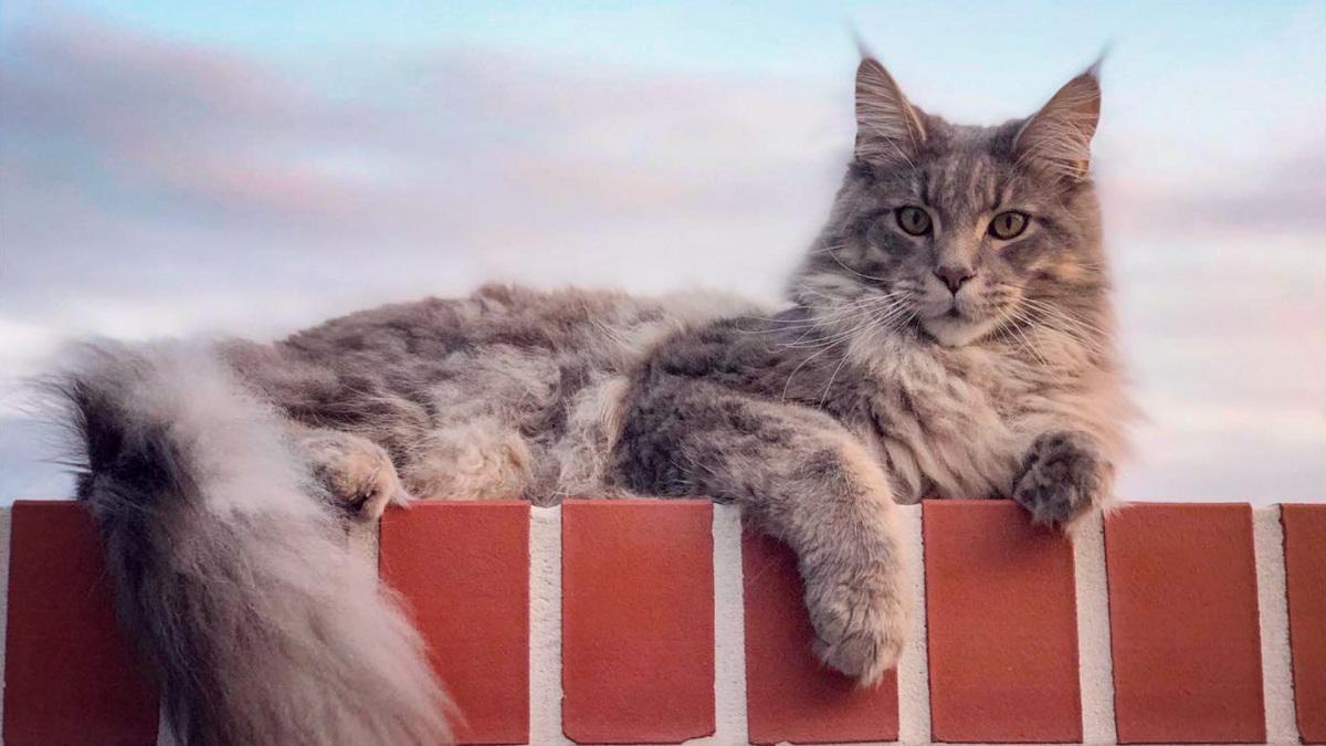 macska-indito.jpg