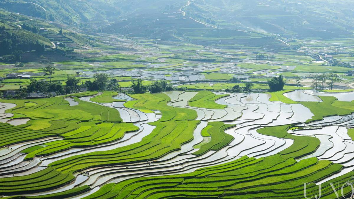 rizsfoldek-vietnamban.jpg