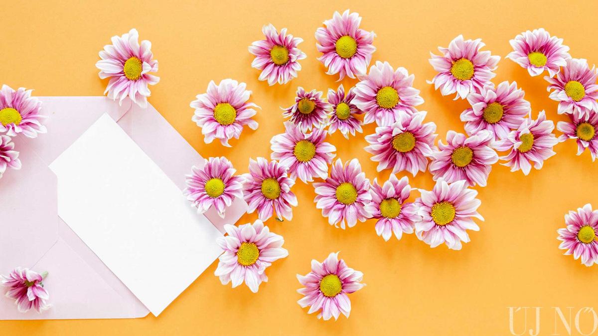 top-view-pink-flowers-envelope-leveltitok.jpg