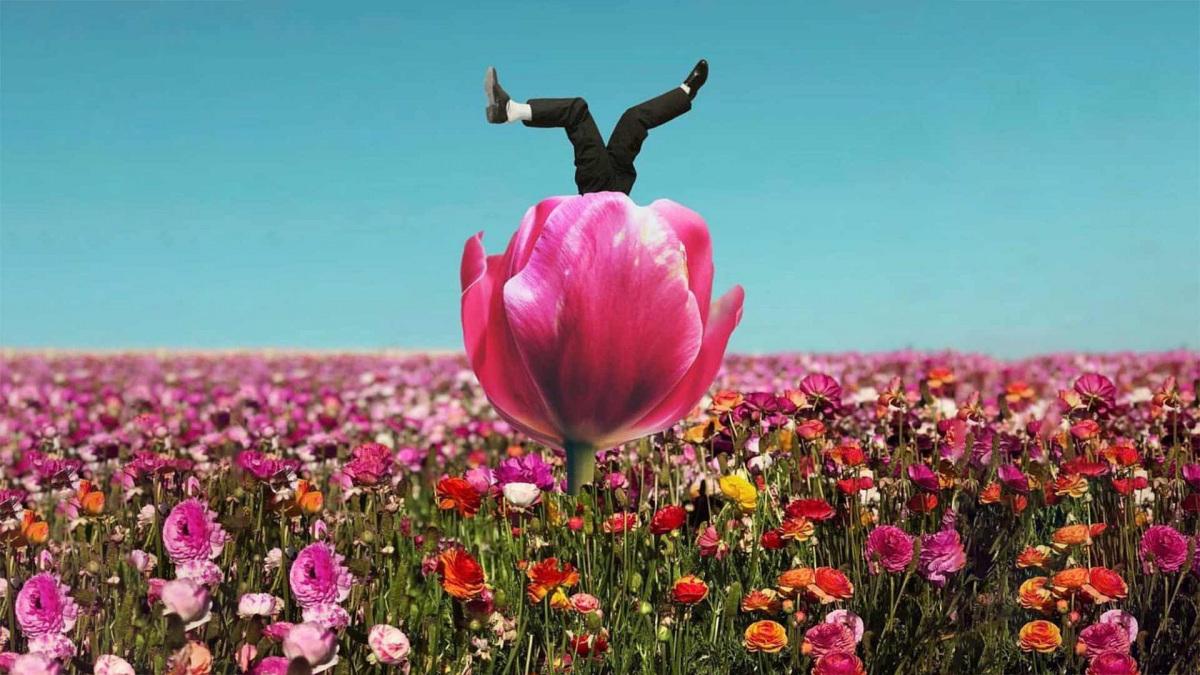 tulipanos-kezdo.jpg
