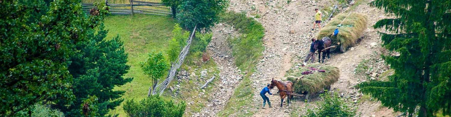 Kaszá(ló)k