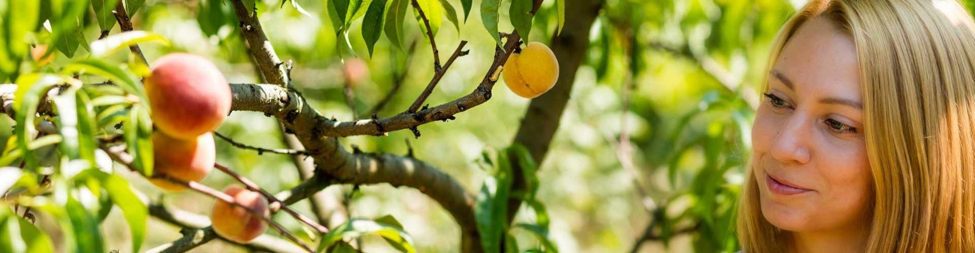 Palackba zárt gyümölcsöskert