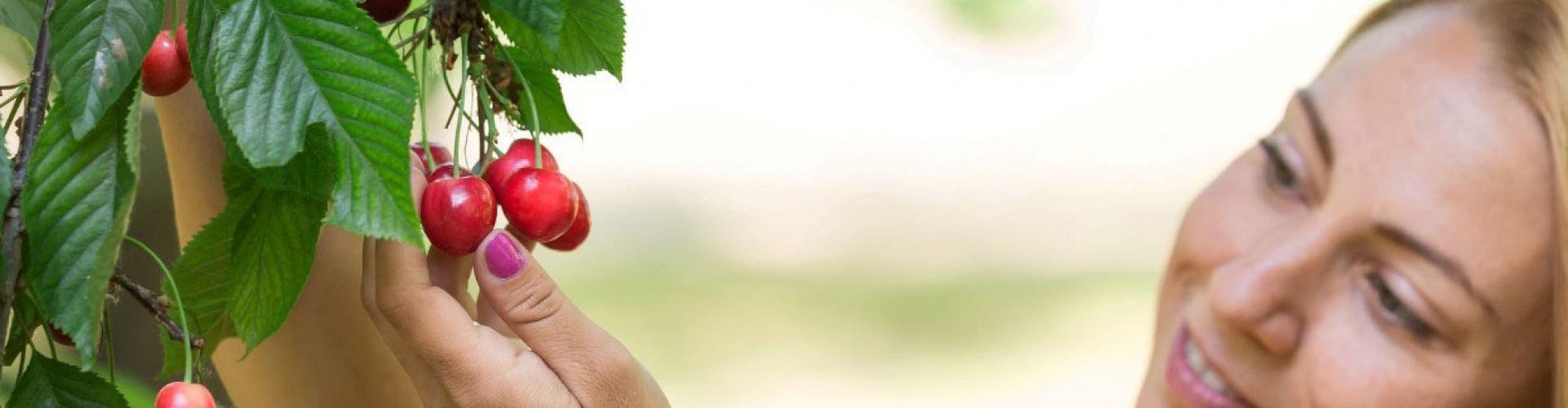 Ízletes, lédús cseresznye és eper