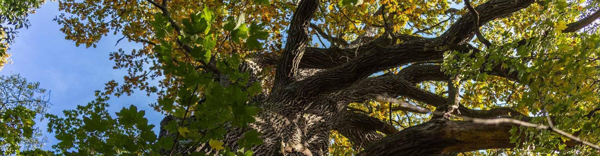 Éghajlatunk tartóoszlopai a fák