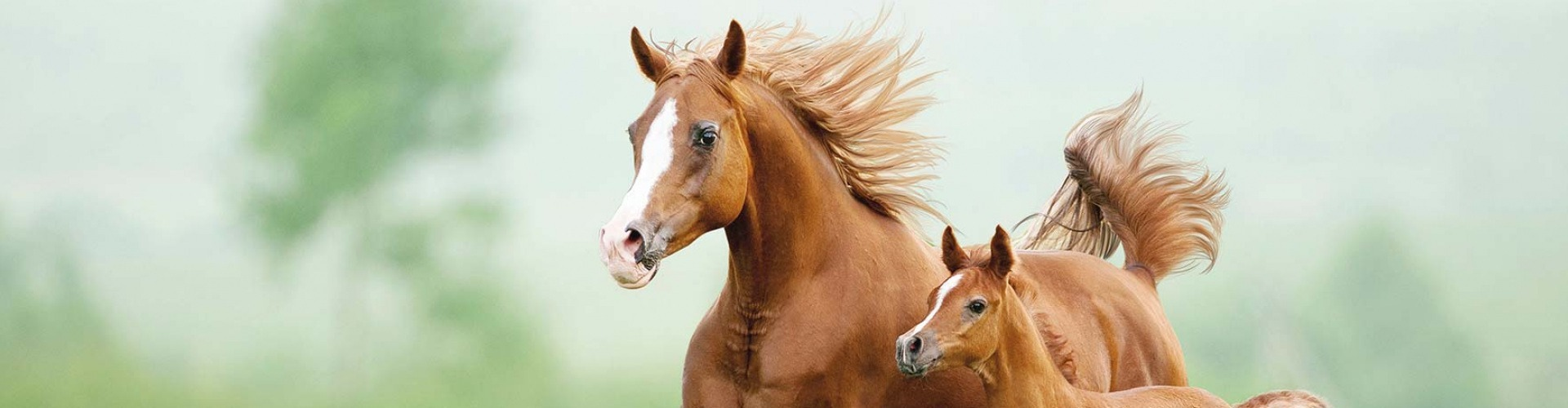 vagy találkozik férfiak genfben keresés házas lovas