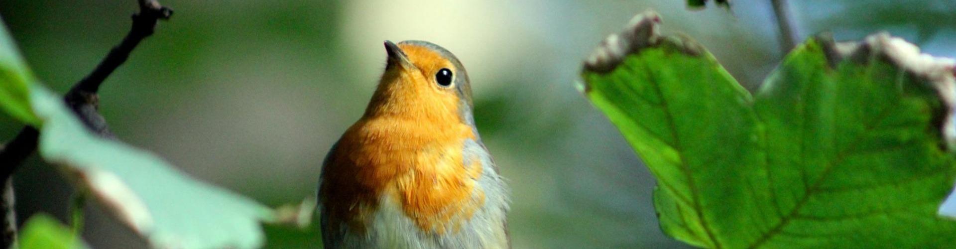 Hallgassunk madárcsicsergést!
