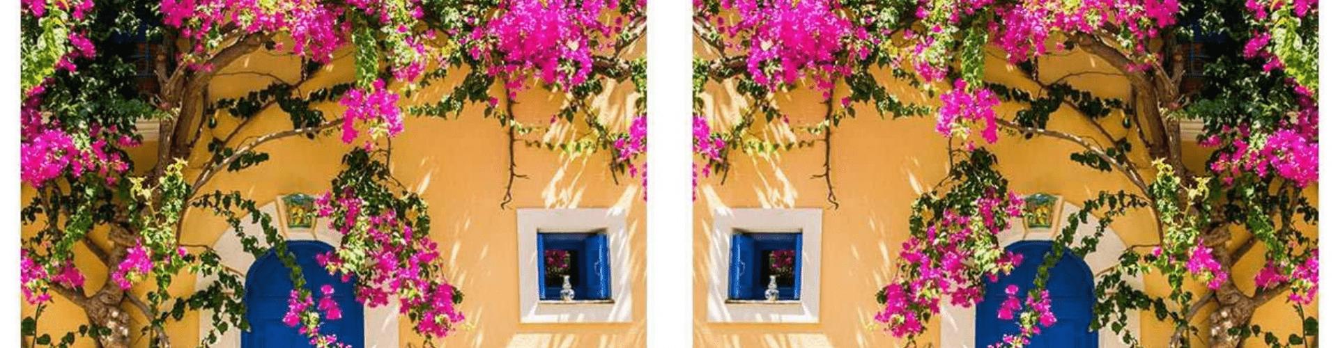 Nyár, színek, virágok
