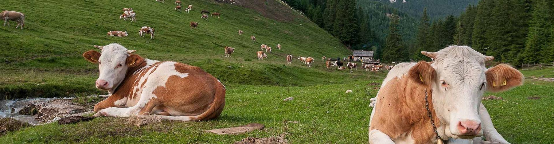 Pásztorok Erdélyben