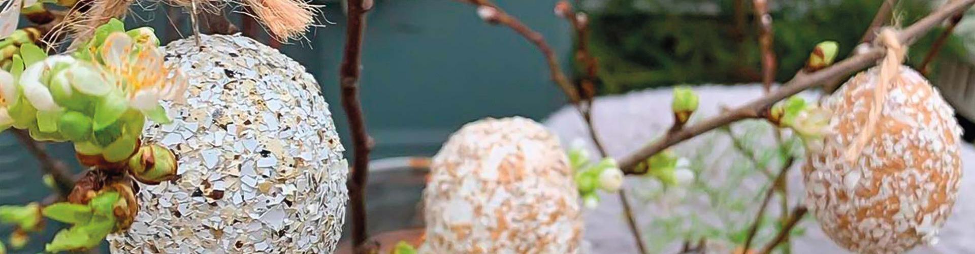Törött héjból tojáscsoda