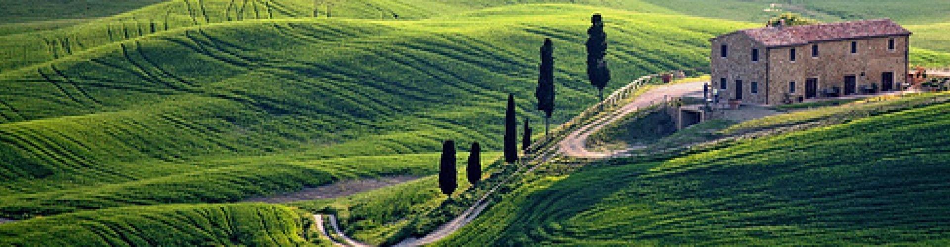 Toscana olajbogyószüretkor