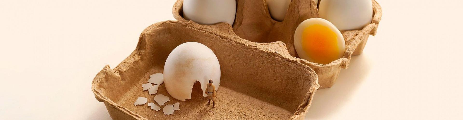 Tyúk vagy tojás?