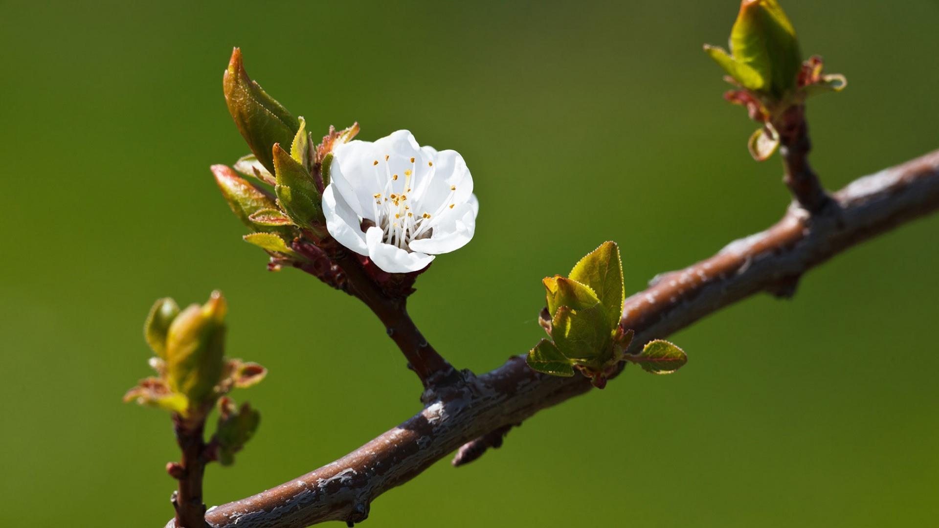 Március – Tavaszelő – Böjtmás hava