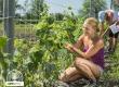 Egészséges, friss uborka