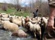 A pásztorképek fotósa