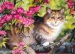 Egy macska, hét év: 420 ezer kiscica!