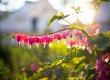 Május - a virágok hónapja