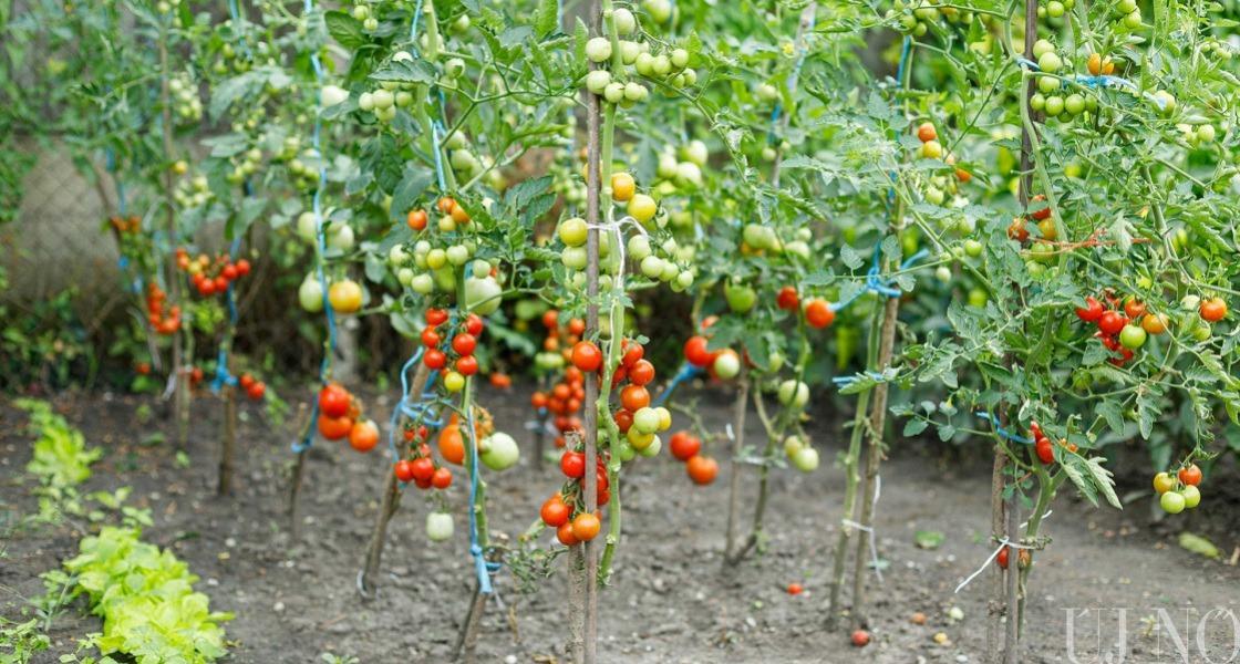 A patonyi Mónika kertje