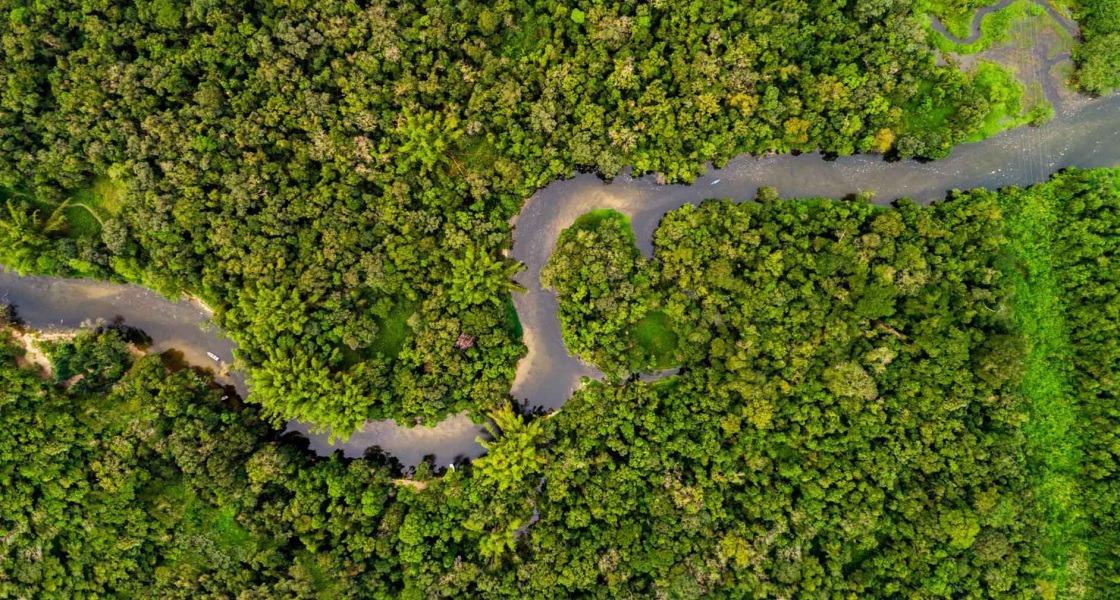 Az esőerdő és a jobb élet