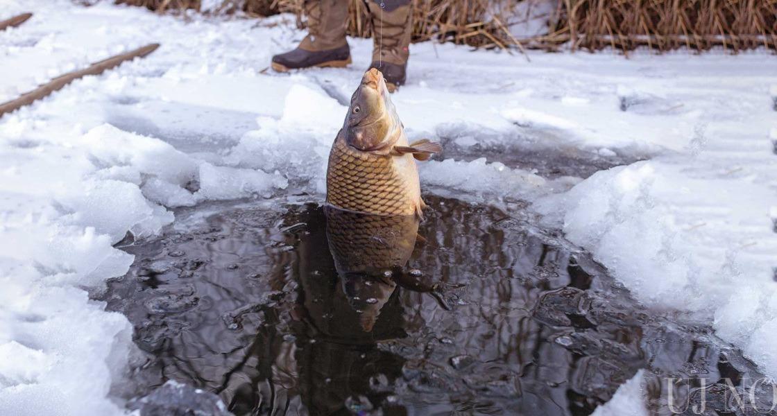 Lékhalászat télvíz idején