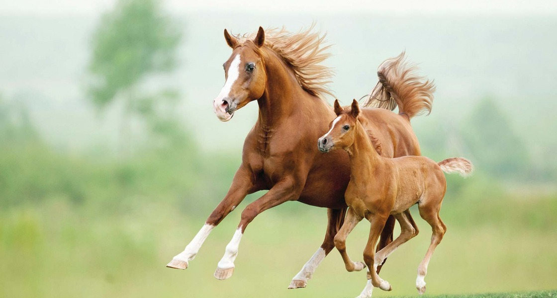 Lóval gyógyulni 1.