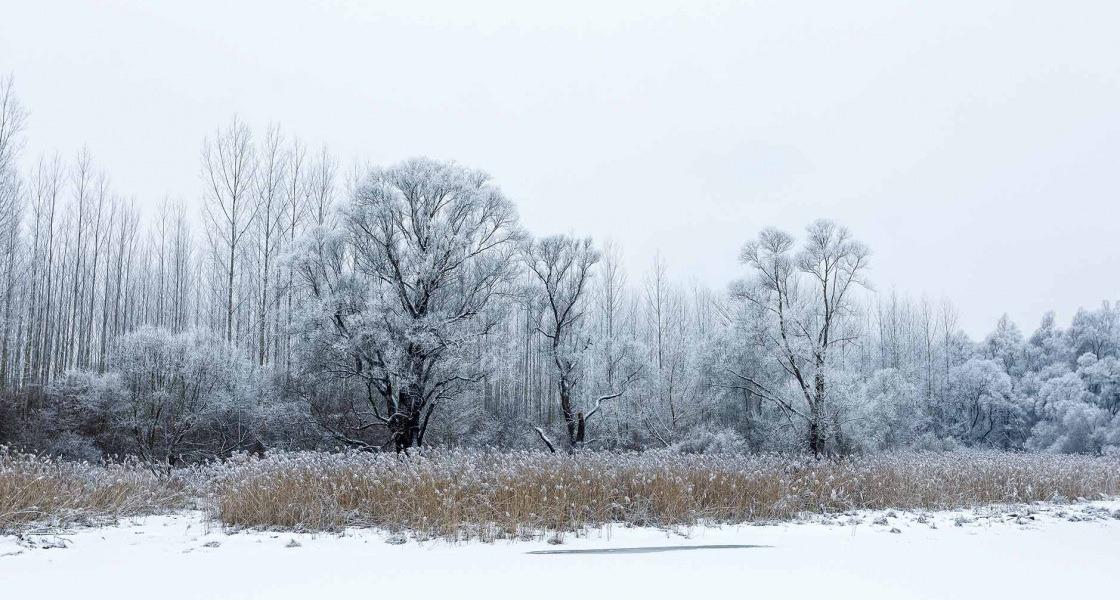 Szürke tél