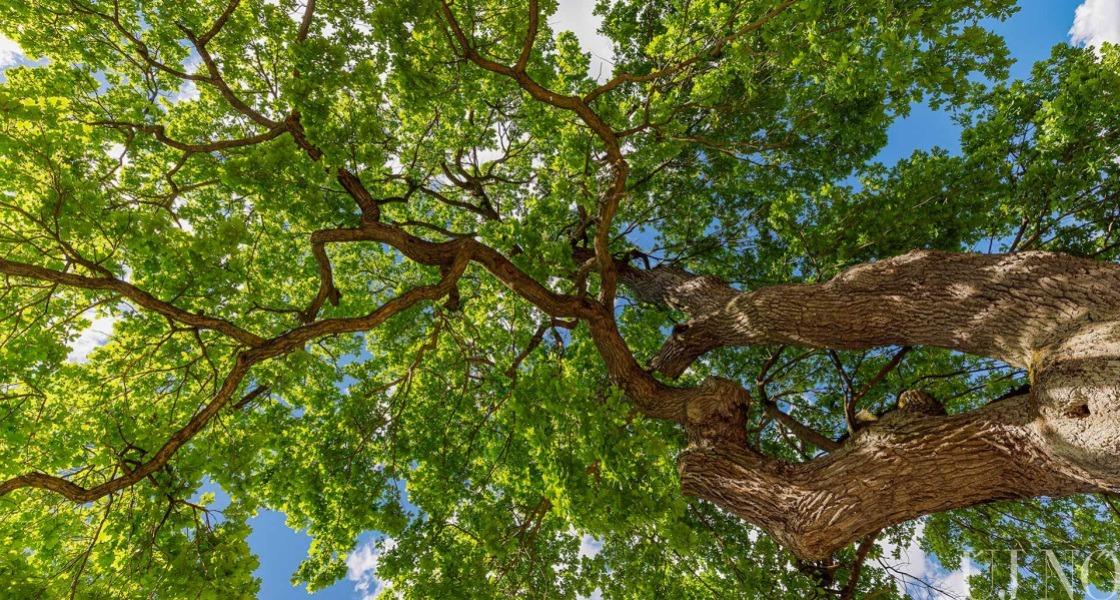 Ültess fát!